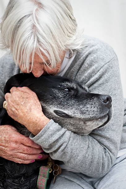 Figgy gets a cuddle stock photo