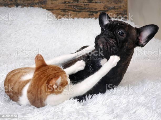 Fight cat dog picture id646828826?b=1&k=6&m=646828826&s=612x612&h=wzv9qh5unlah0crjy52exrr4yfekkj03zap6vnurrki=