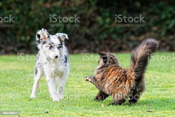 Fight like cat and dog picture id466268607?b=1&k=6&m=466268607&s=612x612&h= jlrp0j177napf2gbqvzqy1izxs5 svnx57ocwpgae8=