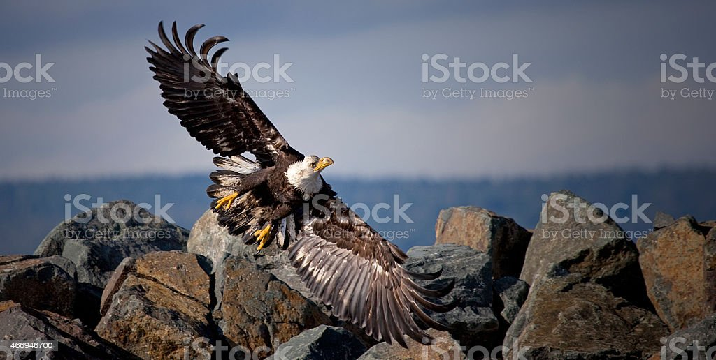Fight or Flight royalty-free stock photo