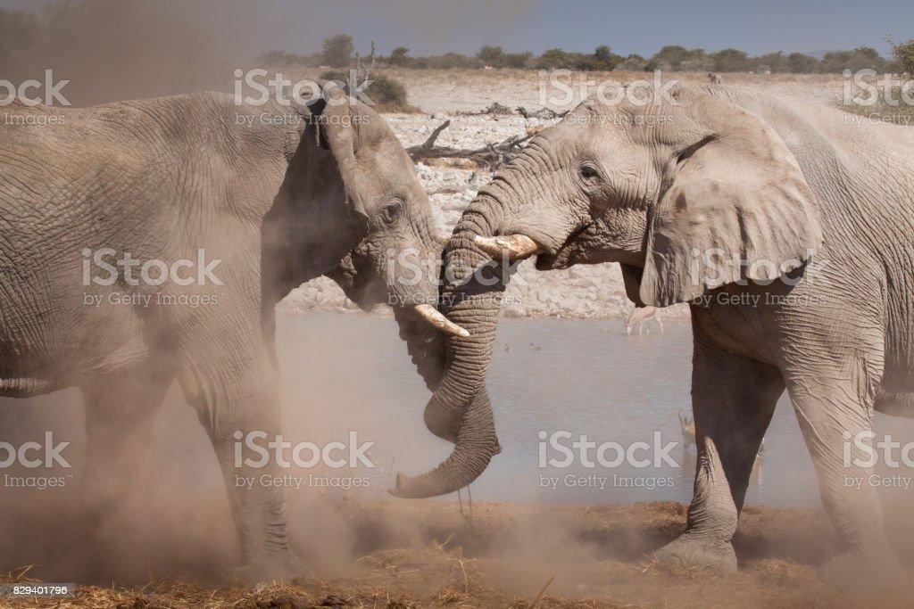 fighting elephants stock photo