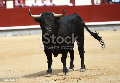 Fighting european bull
