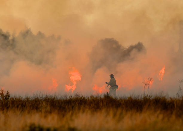 vuur met vuur bestrijden. - bosbrand stockfoto's en -beelden