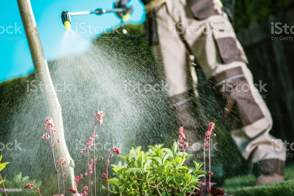 Fighting Insects in the Garden stock photo