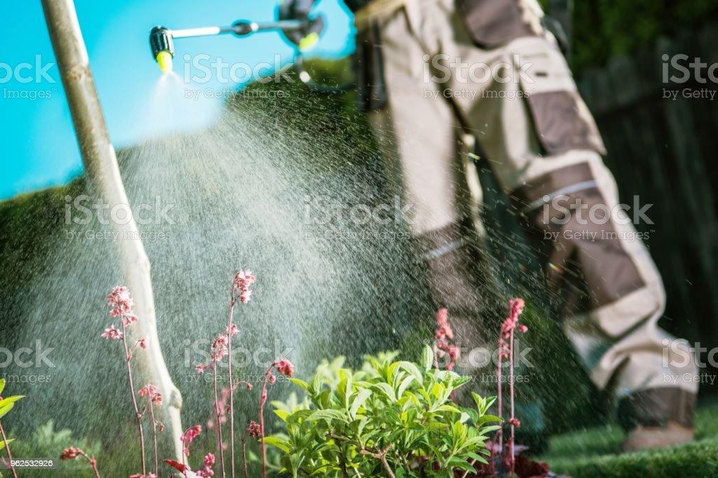 Luta de insetos no jardim - foto de acervo