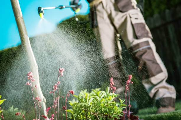 fighting insects in the garden - attrezzatura per la disinfestazione foto e immagini stock