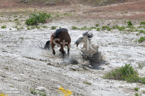 Wild horses fighting - this fight lasted 44 seconds