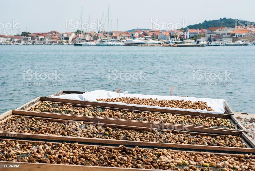 Figs drying on the sun near Adriatic Sea stock photo