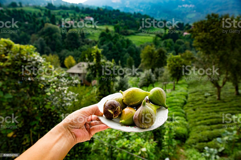 figs on a plate stock photo
