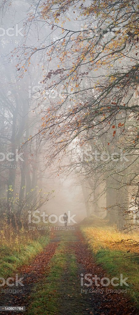 Figure in misty woodland royalty-free stock photo