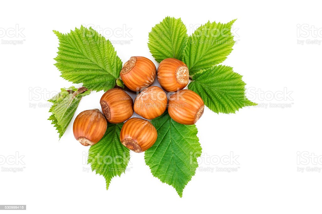 Filbert nuts with leaves on white. Flat lay, top view. stock photo