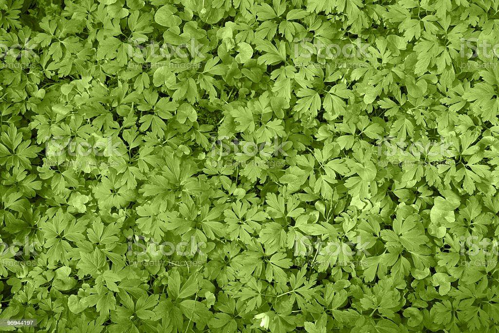 filigree leaves royalty-free stock photo