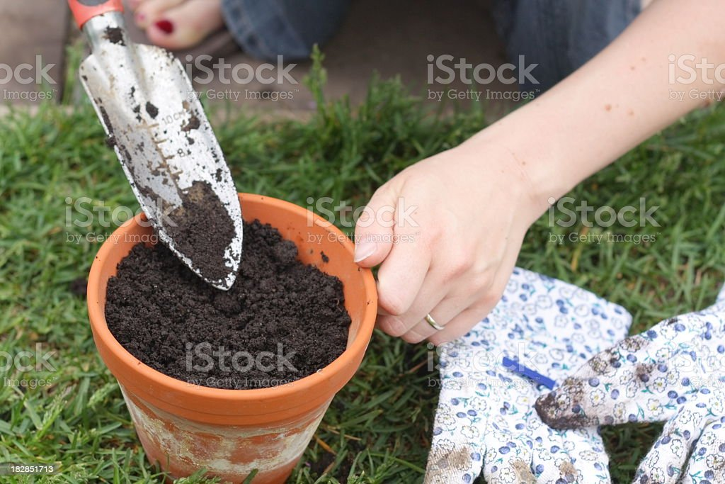 Filling Pot with Soil royalty-free stock photo