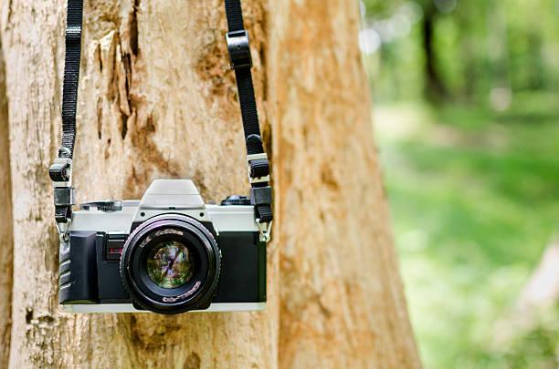 Film camera hanging on a tree stock photo