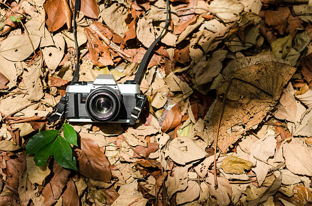 Film camera over dried leaves stock photo