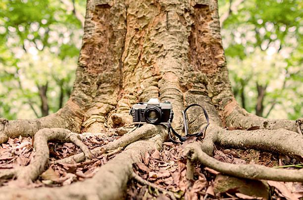 Film camera under a big tree stock photo