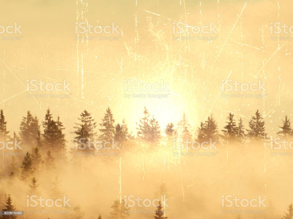 Film effect.Stripped colorful mist. Summer forest after heavy rain. Treetops are  stripping inversion stock photo