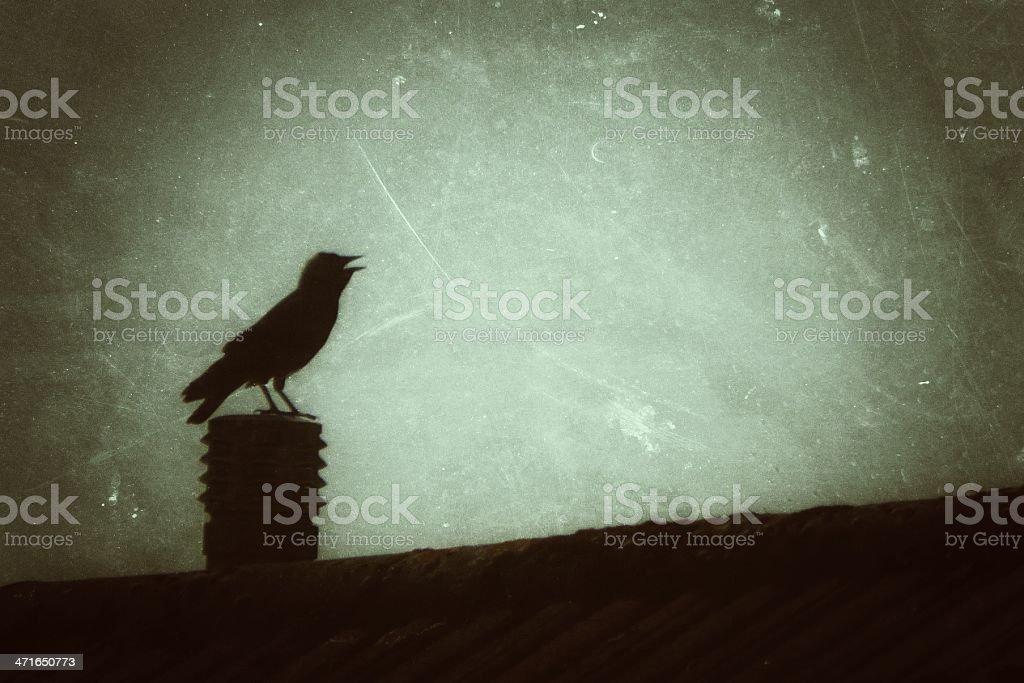 Film noir grungy dawn bird sings out stock photo