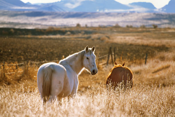 Film gescande afbeelding van twee paarden foto