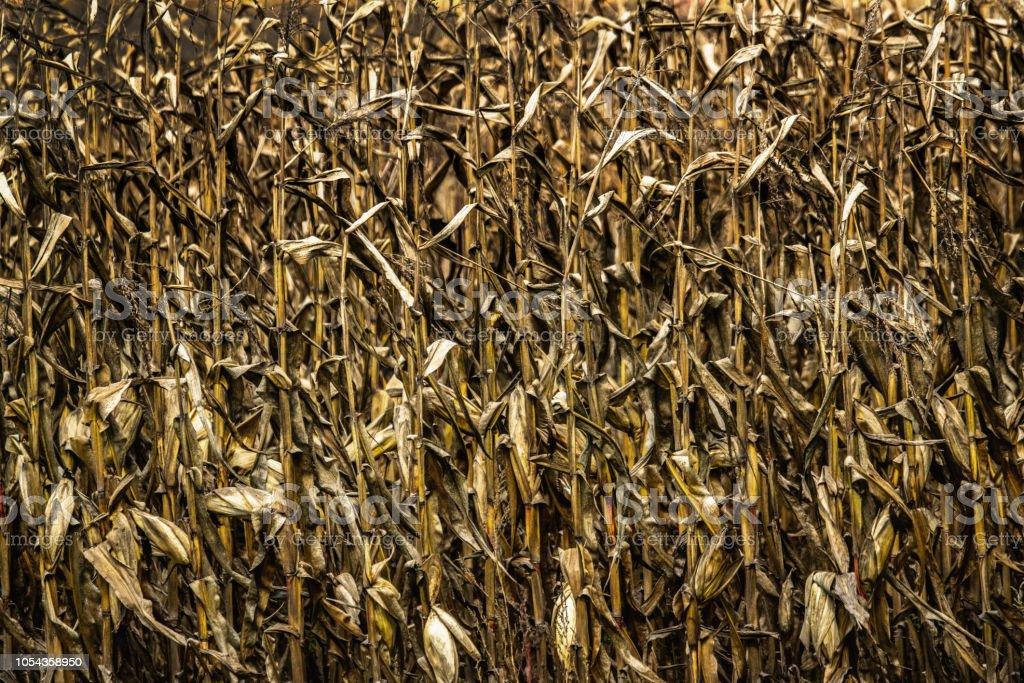 Fin de saison en agriculture - Photo