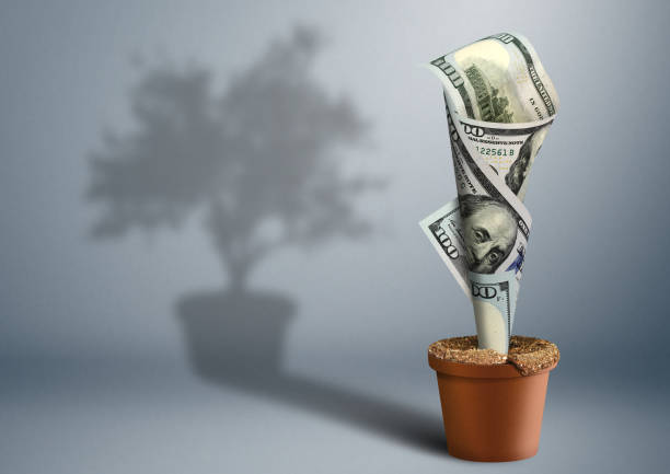 finance creative concept, money as tree in pot stock photo