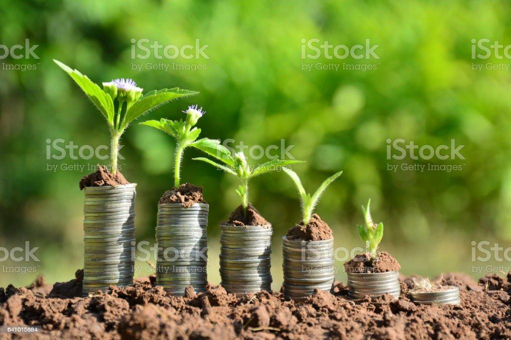 Finanzen-Stack Münzen und die grüne Pflanze auf Boden – Foto
