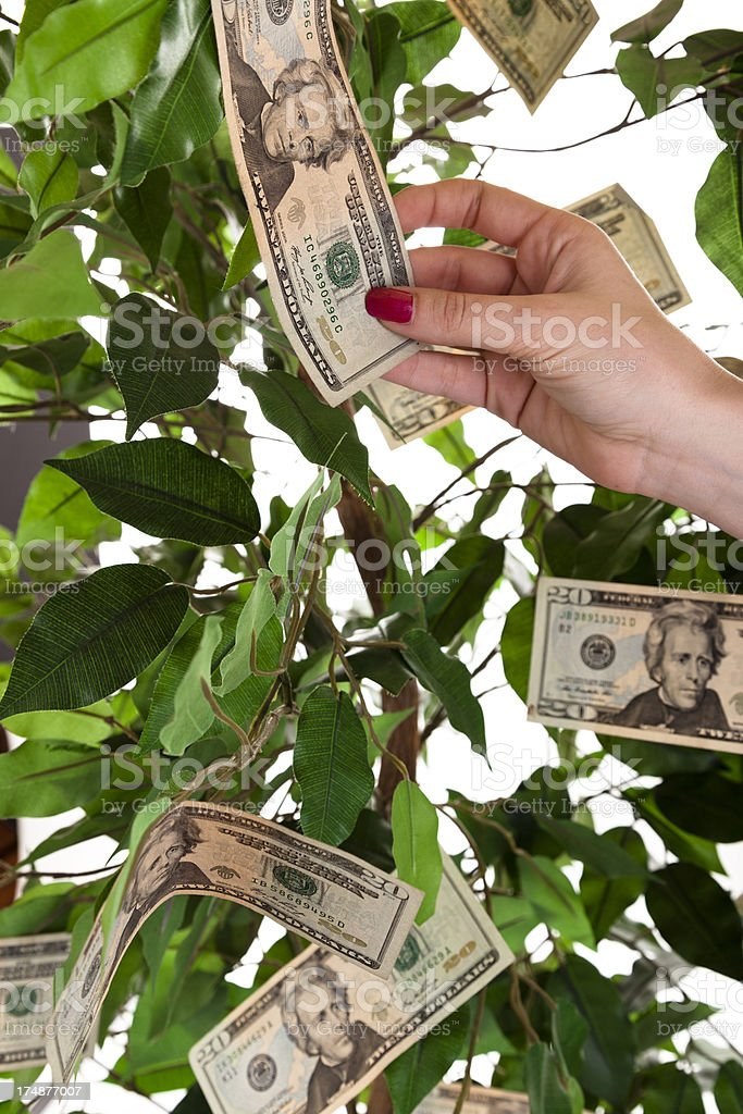 Finances:  Female hand reaching for money growing on tree. royalty-free stock photo