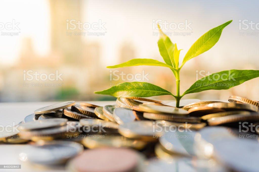 Crecimiento financiero, planta en pila de monedas con fondo de paisaje urbano - foto de stock