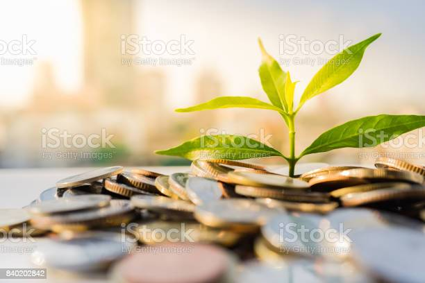 Photo of Financial Growth, Plant on pile coins with cityscape background