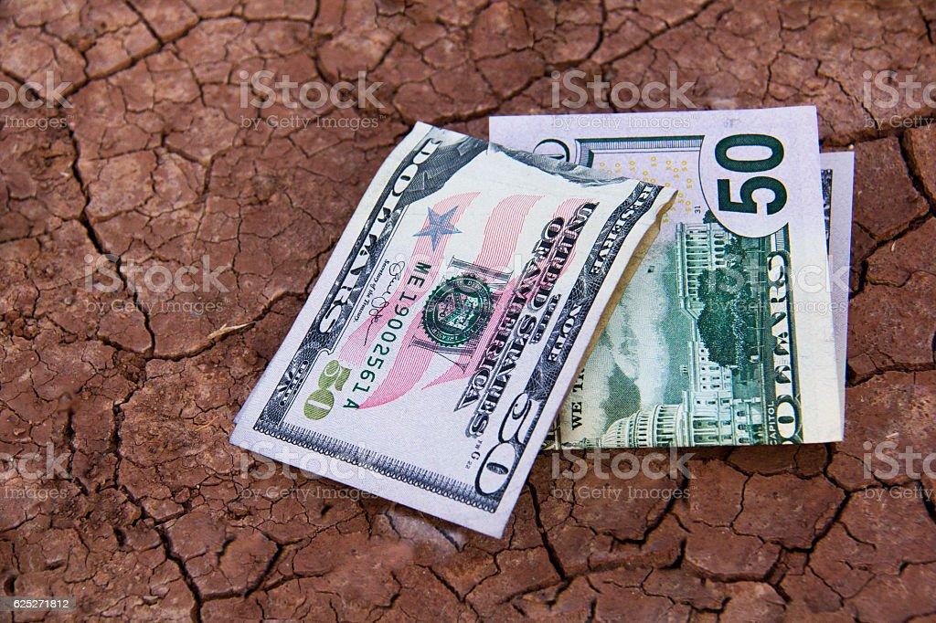 Financial growth/Cash Crop stock photo