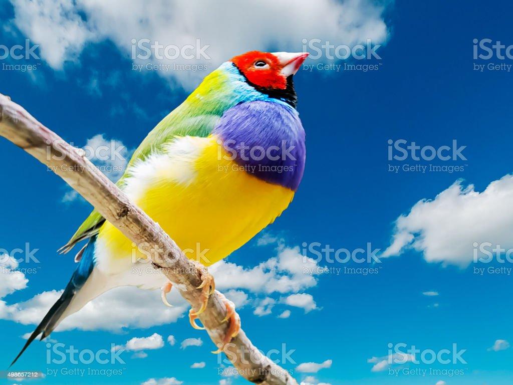 Finch stock photo