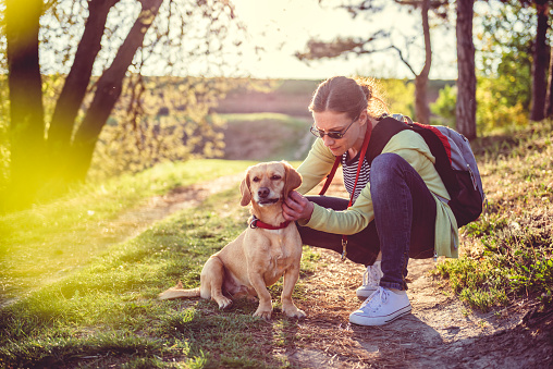istock Find a tick on a dog 671260196