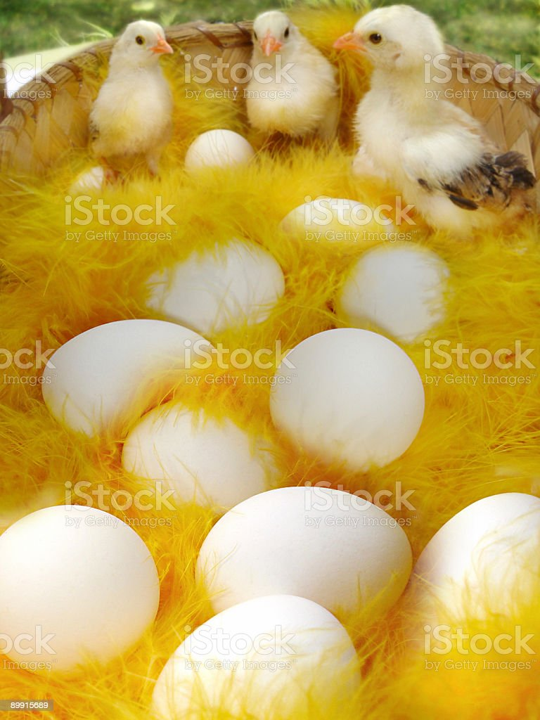 Find the 13th Egg! royalty-free stock photo