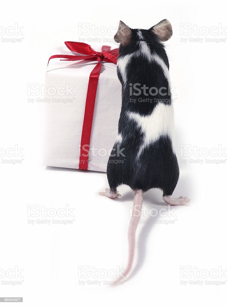 finding a gift stock photo