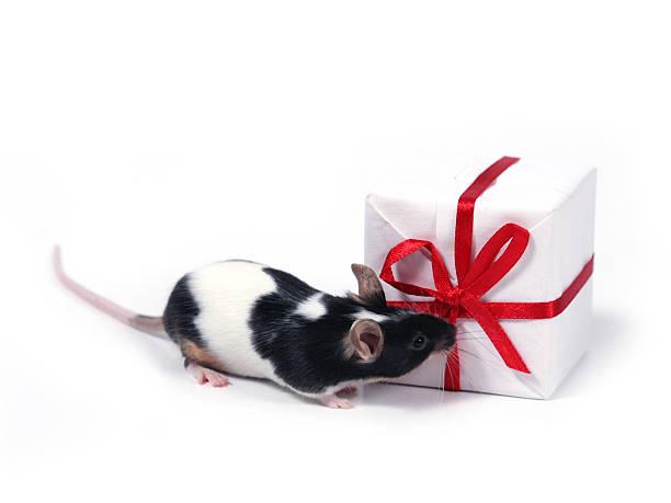 Ein Geschenk finden – Foto