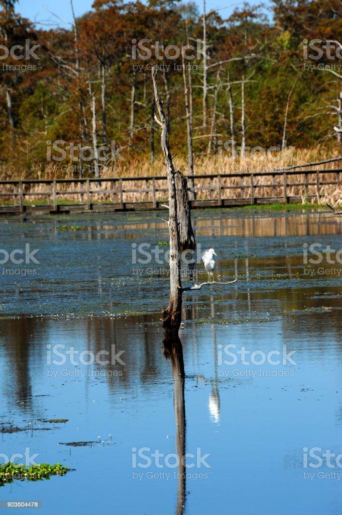 Finding Refuge in Black Bayou stock photo