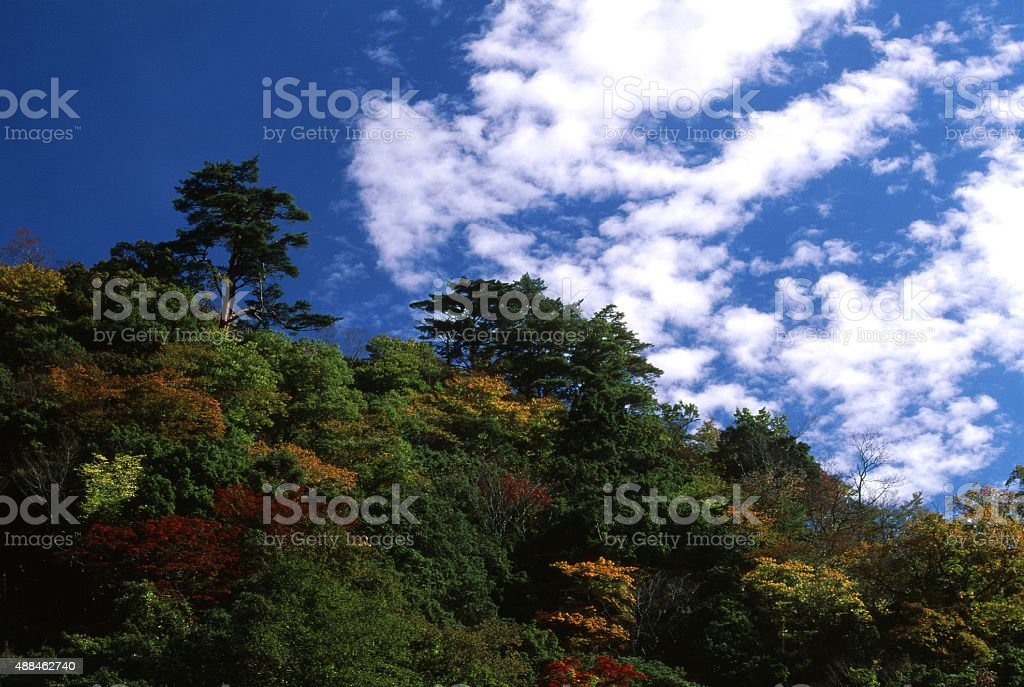 高級な秋の季節 ロイヤリティフリーストックフォト