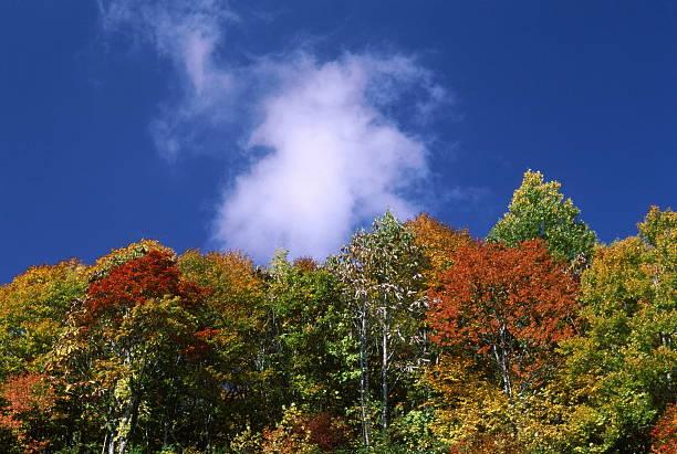 高級な秋の季節 ストックフォト