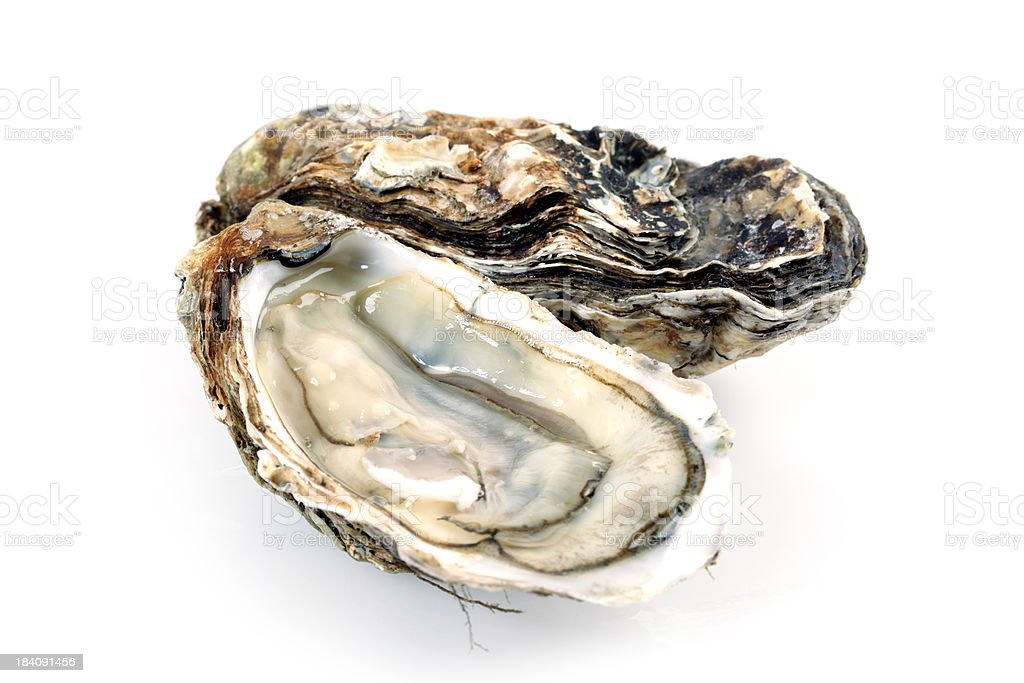 Fine de Claire Oysters Isolated on White royalty-free stock photo