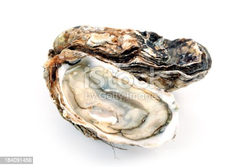 Isolated Fine de Claire oysters on white.