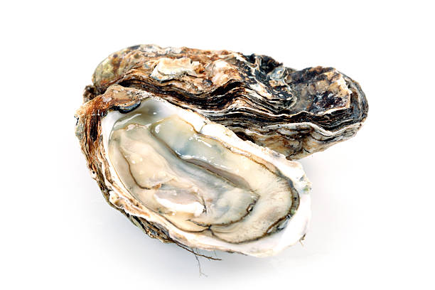 fine de claire oysters isolated on white - oyster stock pictures, royalty-free photos & images