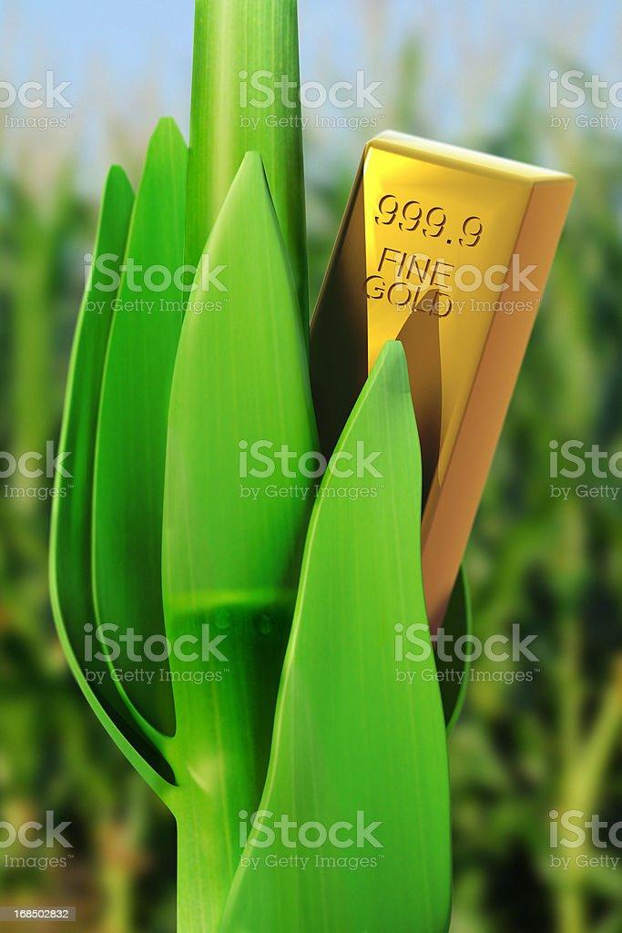 Fine Gold Bar in a Cornfield stock photo