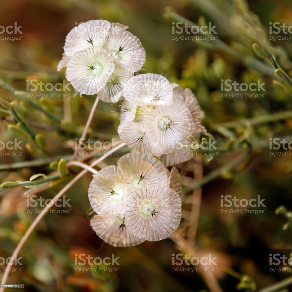 Fine refined pink flowers royalty-free stock photo