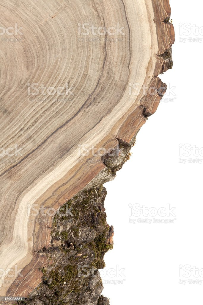 Finely detailed wooden cross section royalty-free stock photo