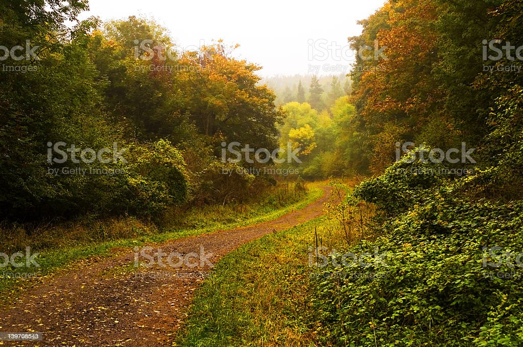 Fineshade Wood stock photo