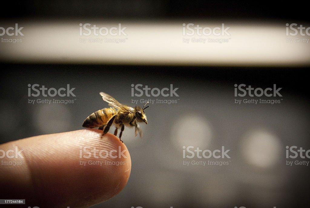Finger bee stock photo