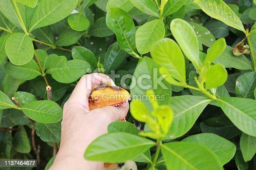 istock Finger bite by dinosaurs 1137464677