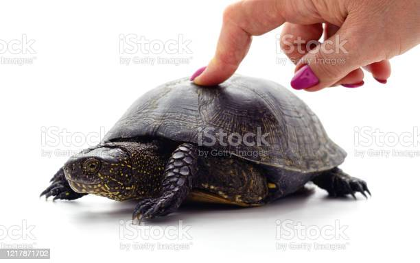 Finger pressing on turtle picture id1217871702?b=1&k=6&m=1217871702&s=612x612&h=2ms1poz2f4odsqupbwxaeato2pw6jzlzr9jh8tiflvi=