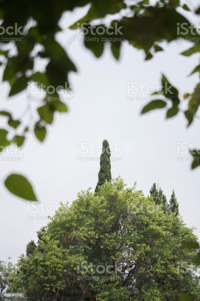 finger tree royalty-free stock photo