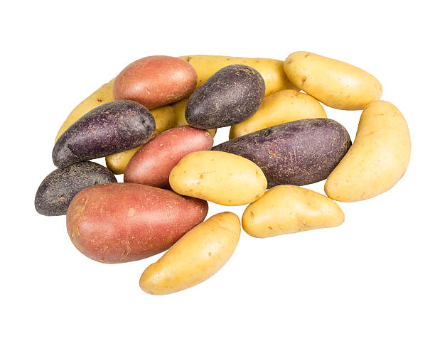 Fingerling potatoes of several colors isolated stock photo